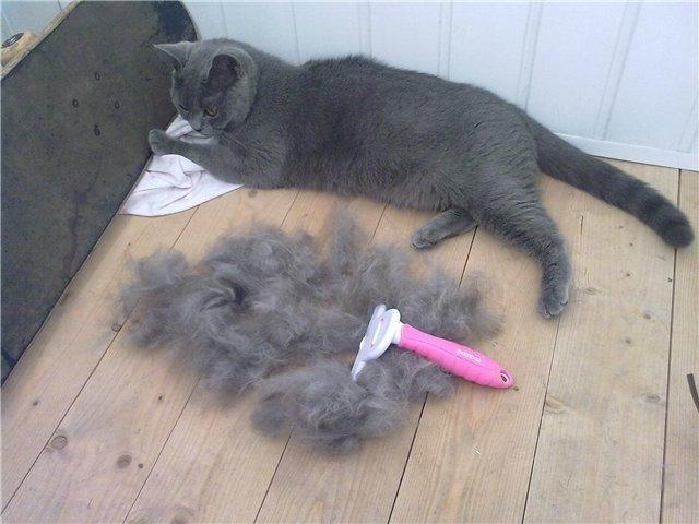 Как бороться с шерстью кошек в квартире?