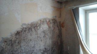 Чем обработать стену от грибка перед покраской