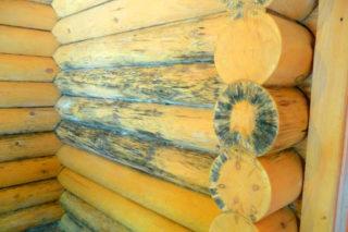 Чем обрабатывать грибок на дереве