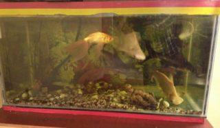 Почему в аквариуме зеленеет стекло и камни и как от этого избавиться
