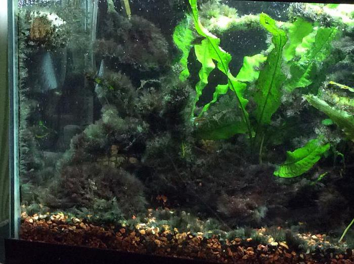 главных коричневый налет в аквариуме фото пансионат айтар