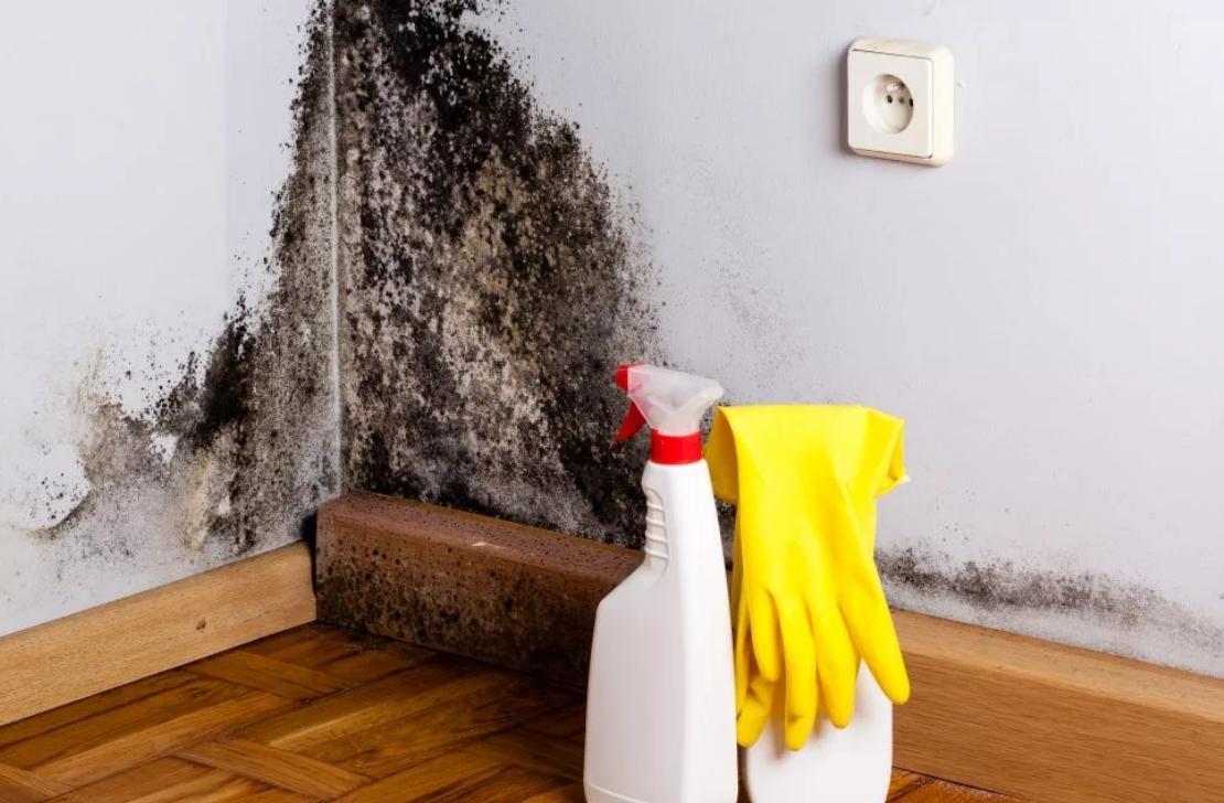 Грибок в частном доме как избавиться
