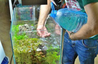 Как часто и правильно моют аквариум с рыбками?