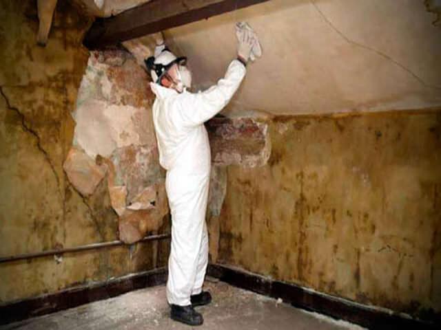 как избавиться от грибка в подполье