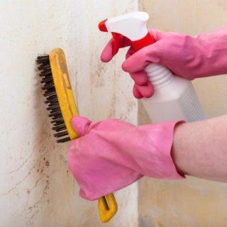 Как избавиться от плесени на стенах в частном доме