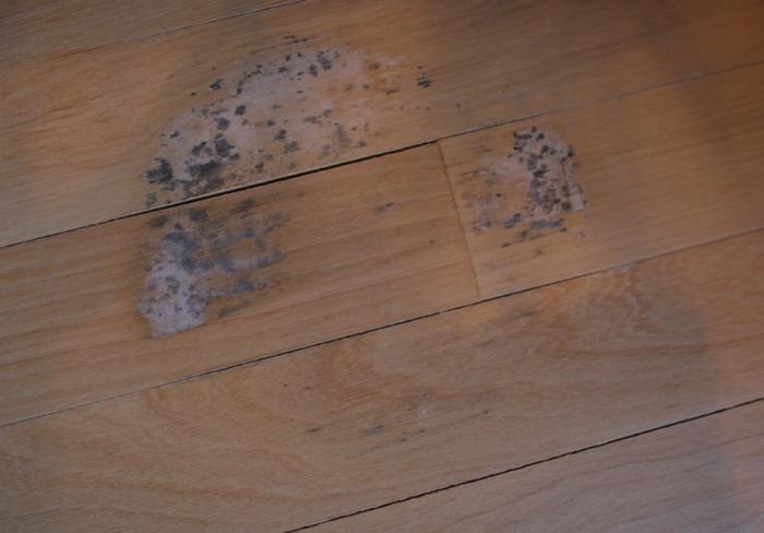 Как вывести пятно от сырости на линолеуме фото