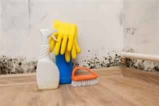 Правильно удаляем плесень в доме, чем убрать плесень со стен навсегда