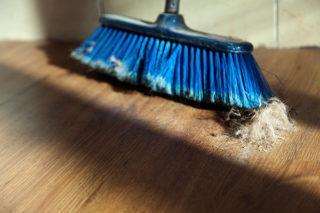 Пыль и шерсть домашних животных постепенно превращаются в опасную для здоровья человека грязь