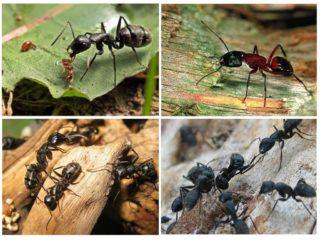 Разнообразие видов муравьев