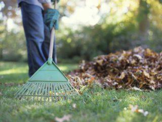 Сбор опавших листьев один из элементов уборки участка