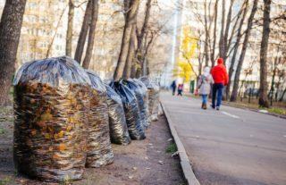 Уборка придомовой территории многоквартирного дома: кто должен убирать, чья это обязанность, нормы и периодичность уборки снега