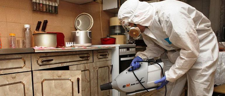 Чем уничтожить тараканов в частном доме