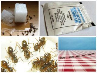 Поселились муравьи на кухне - ищем причину и устраняем проблему