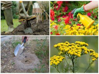 Как вывести рыжих муравьев: химические средства и народные методы