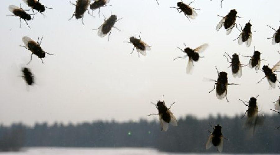 Как избавиться от мух в кафе