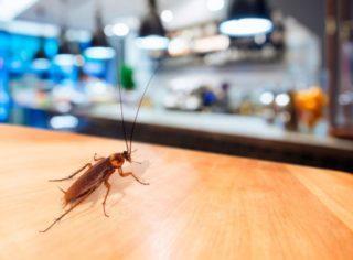 Нашатырный спирт для тараканов