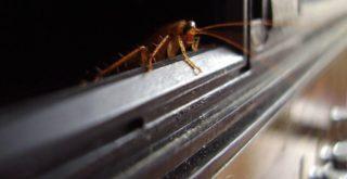 Как быстро вывести тараканов в домашних условиях: народные рецепты