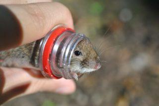 Как убрать мышей с дачи