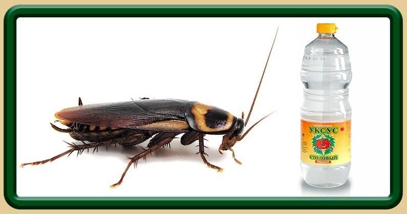 Уксус от домашних тараканов в квартире