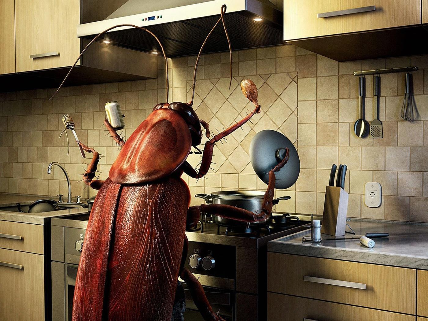 Чистый дом от тараканов состав