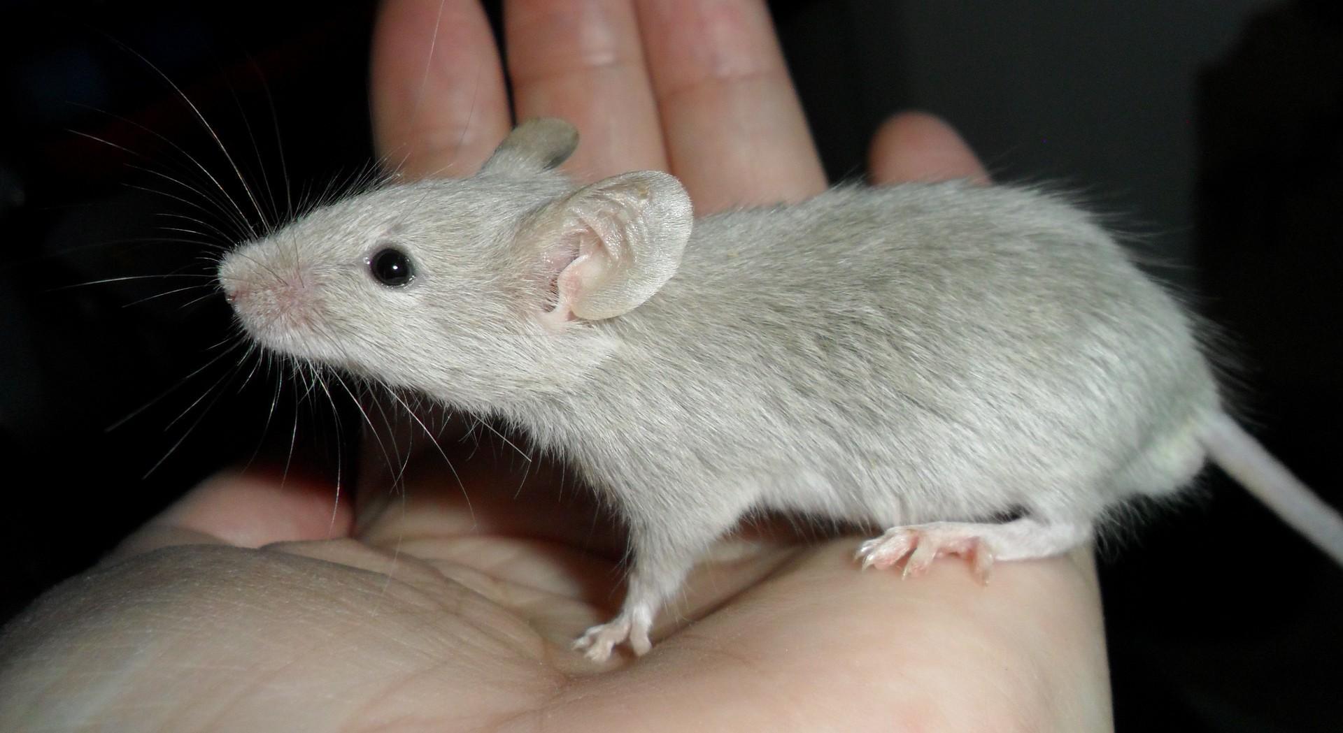 Мышеловка не убивающая мышей