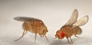 Как избавиться от маленьких мух в квартире