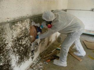 Обрабатываем бетонные стены от грибка