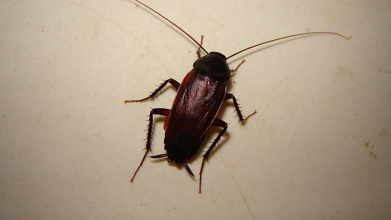 канализационные жуки