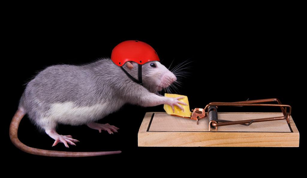 Сколько времени воняет дохлая мышь