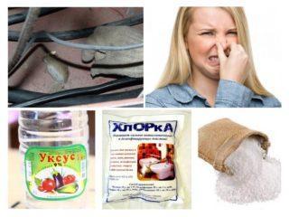 Чем убрать запах умершей крысы или мыши под полом или в стене