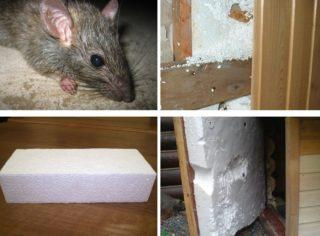 Мыши в утеплителе как избавиться
