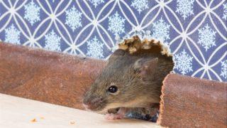 Какой утеплитель не грызут мыши — давайте разберемся!