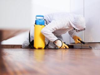 Чем вымыть квартиру от блох