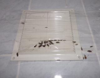 Мокрица насекомое в квартире, ванной, как избавиться, вывести, борьба, фото, как выглядит?