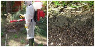 Эффективный гель от муравьев
